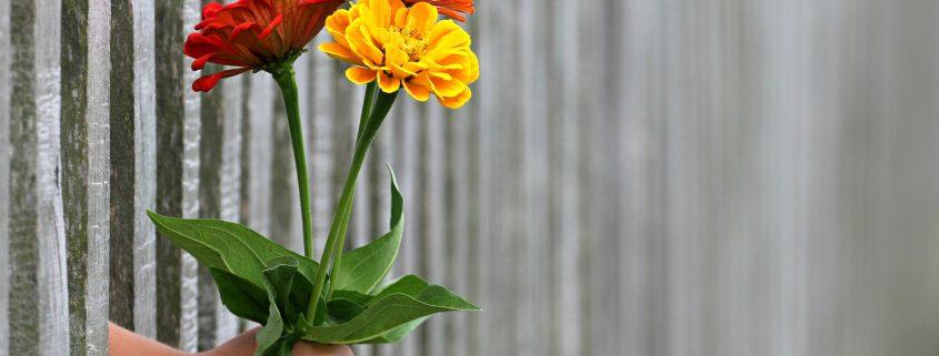 Blumen in einer Faust